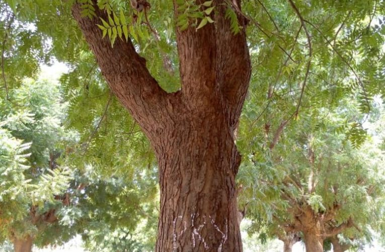 Students Convert Trees To Classrooms In Kano Amidst Huge Education Budget